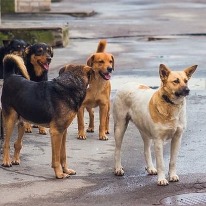 Kutyatulajdonosok FIGYELEM!